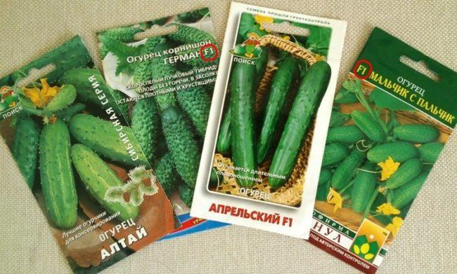 Бумажные пакетики с семенами огурцов обычных и гибридных сортов