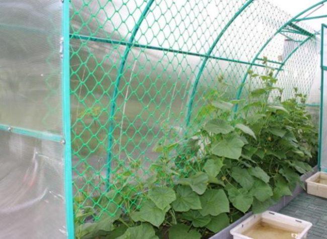 Пластиковая шпалера для огурцов в теплице из поликарбоната