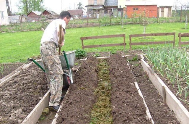 Устройство высокой грядки для выращивания огурцов в открытом грунте