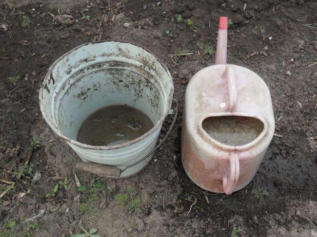 Подготовка настоя из куриного помета для подкормки огурцов на дачном участке