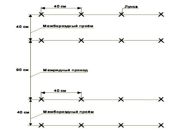 Схема с указанием расстояний между кустами огурцов при посадке в теплице
