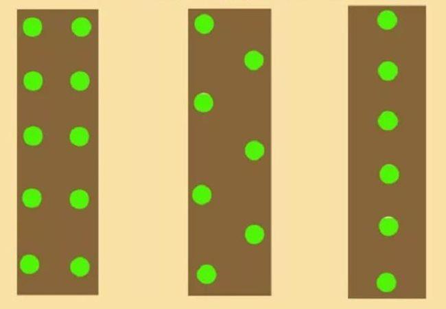 Различные схемы посадки семян огурцов в открытый грунт садового участка