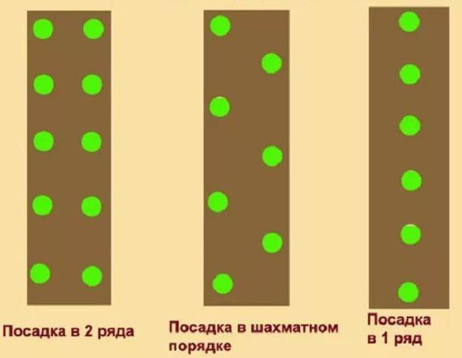 Три схемы посадки огурцов семена в открытом грунте на дачном участке