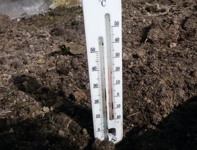 Термометр для определения температуры почвы и воздуха в теплице из поликарбоната