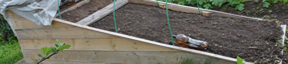Экспериментальная тёплая грядка для огурцов на садовом участке открытый грунт