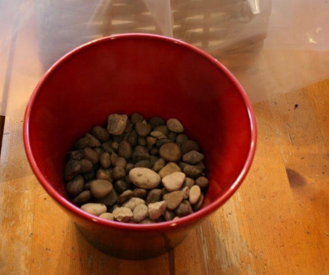 Дренажный слой из камушков в пластиковом горшке для драцены
