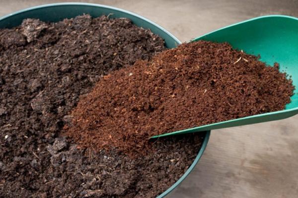 Добавление верхового торфа слабой кислотности в горшок для посадки мюленбекии