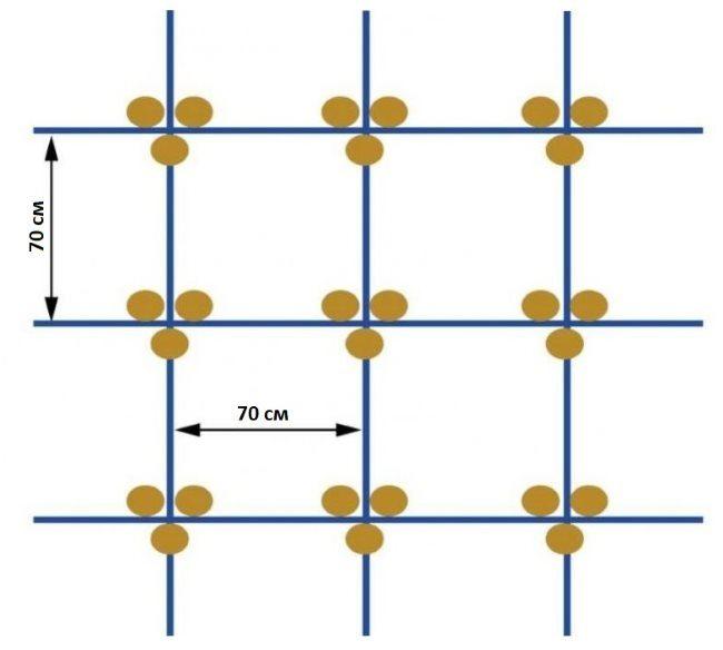 Схема расположения кустов огурцов при квадратно-гнездовом способе посадки