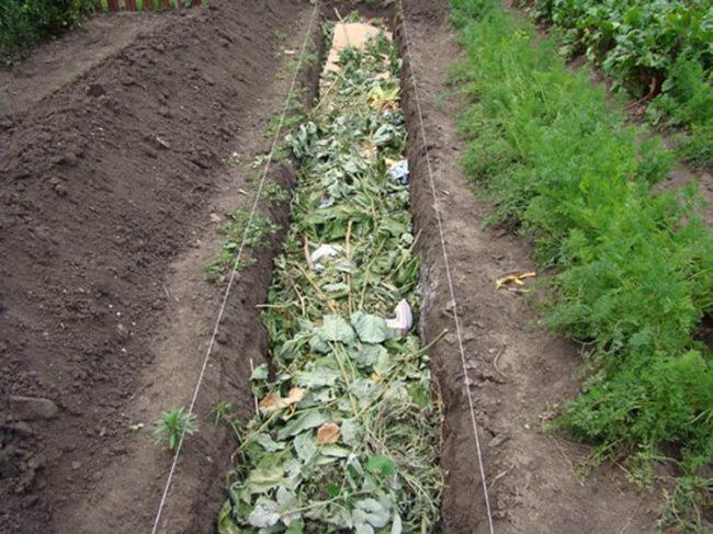 Закладка зеленой массы в теплую грядку для огурцов в открытом грунте