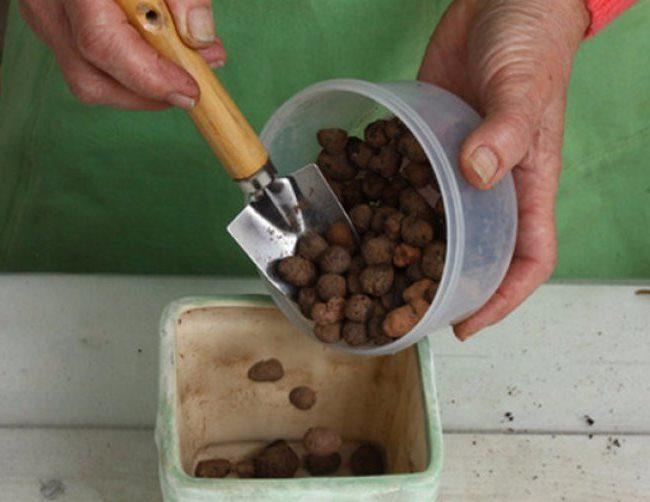 Устройство дренажного слоя из керамзита в горшке для замиокулькаса