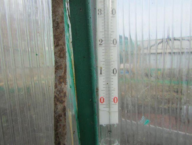 Комнатный спиртовой градусник в теплице из поликарбоната для огурцов