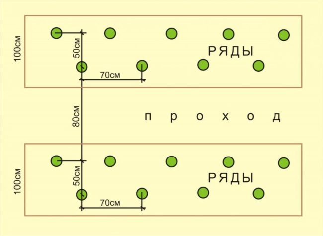 Схема размещения лунок для огурцов при шахматной посадке в теплице
