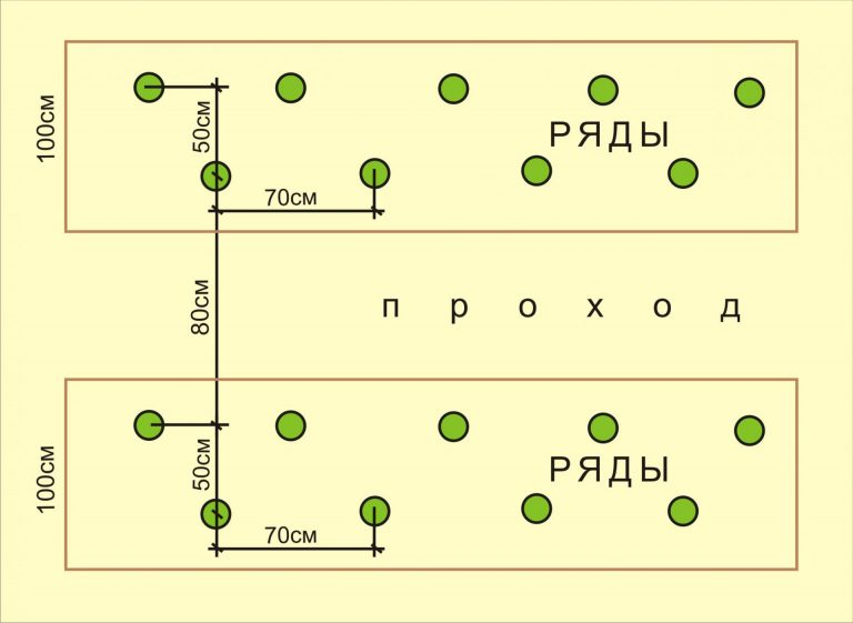 схема посадки огурцов в теплице из поликарбоната
