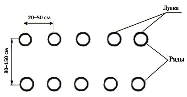 Схема однострочкового способа посадки огурцов в теплице из поликарбоната