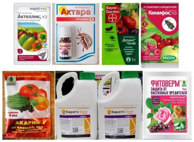 Пестициды и биологические препараты для борьбы с тлей на дачном участке