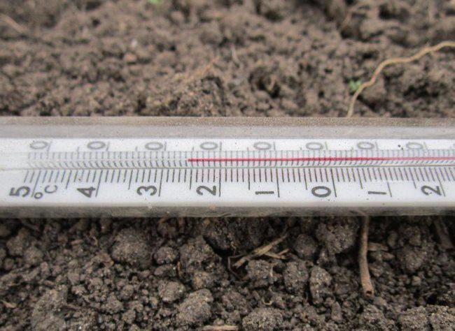 Замер температуры грунта в теплице для огурцов с помощью бытового термометра