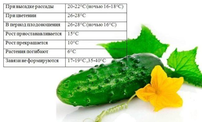 Таблица с оптимальными температурами выращивания огуречных культур
