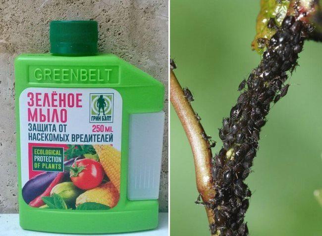 Зеленое мыло для защиты петунии и других цветов от вредных насекомых