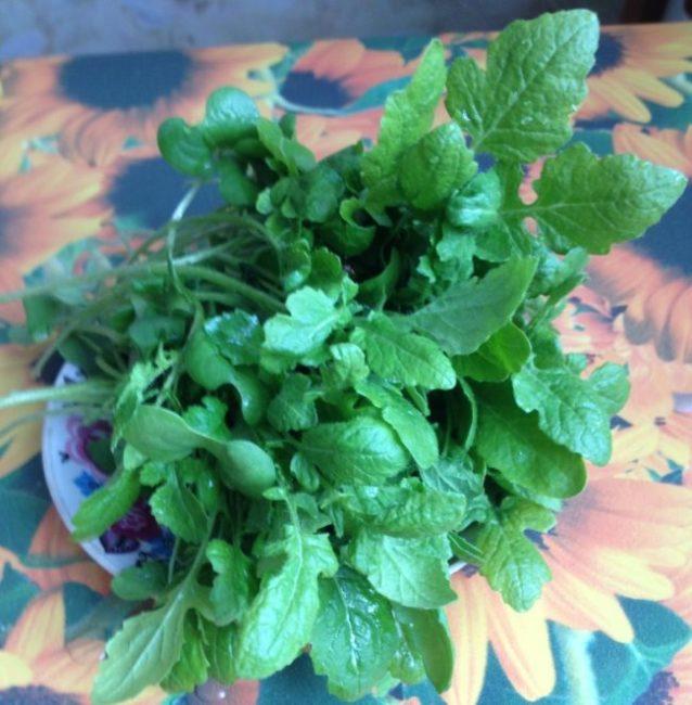 Листья молодой горчицы на кухонном столе вместо петрушки