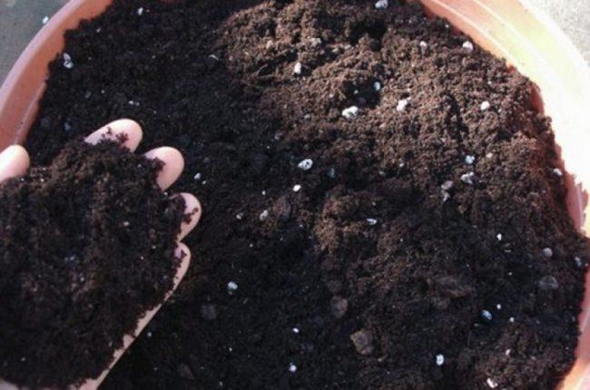 Питательный грунт для наполнения вазона под петунии и другие цветы