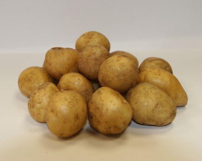 Ровные клубни правильной формы отборного семенного картофеля