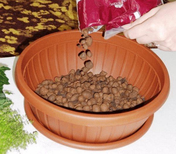 Устройство дренажного слоя из керамзита средней фракции в горшке для петунии