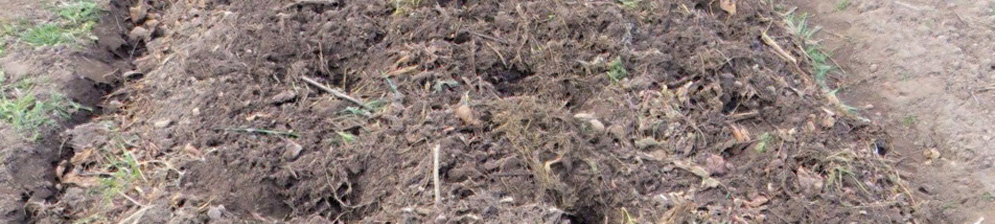 Готовые лунки для посадки картофеля на рядках