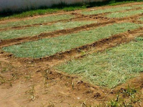 Мульчирование огородных грядок скошенной травой