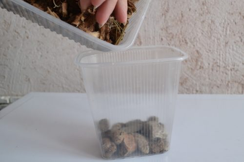 Наполнение прозрачной емкости для орхидеи субстратом собственного изготовления