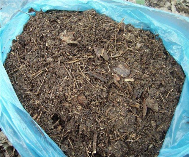 Синий полиэтиленовый мешок с опадом их соснового леса для мульчирования папоротника