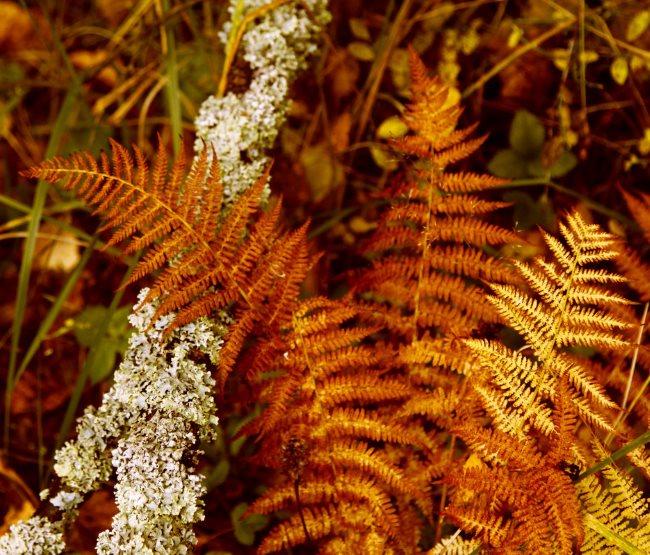 Коричневые листья лесного папоротника в конце осеннего периода
