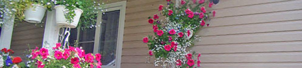 Яркие цветки петунии в кашпо на участке частного дома