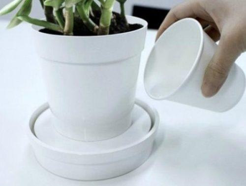 Правильный полив замиокулькаса дождевой водой через поддон в домашних условиях