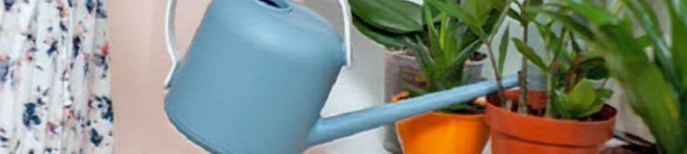Полив замиокулькаса с лейки