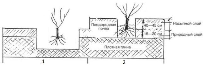 Схемы весенней посадки винограда на почвах с высоким содержанием глины