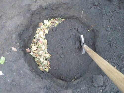 Наполнение ямы листьями и питательным грунтом перед посадкой туи