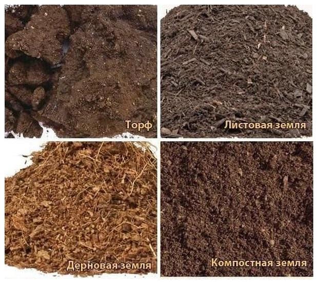 Основные компоненты плодородной смеси для посадки петунии