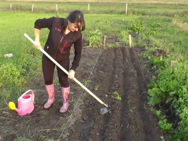 Посадка сидератов в июне для обогащения почвы в огороде