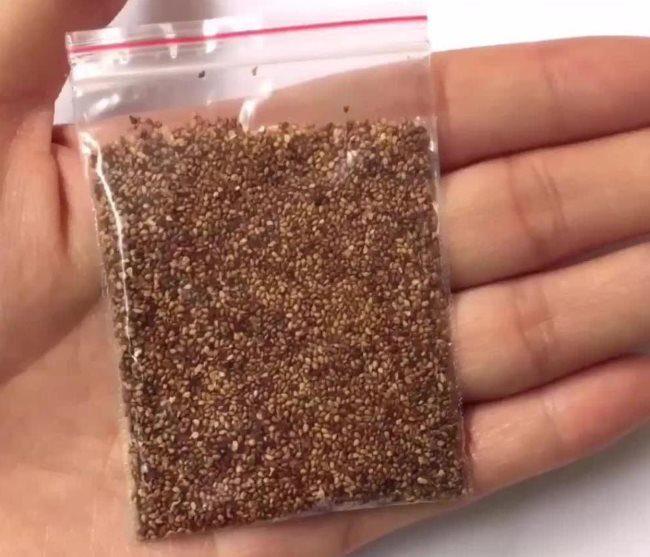 Полиэтиленовый пакетик с отборными семенами клубники