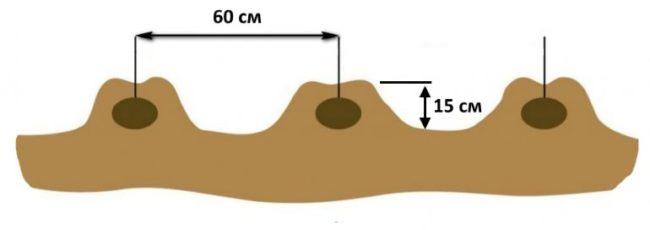 Расстояние между гребнями при посадке картошки по голландской технологии