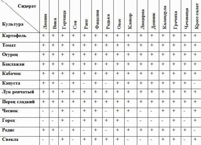 Совместимость растений-сидератов с различными овощами