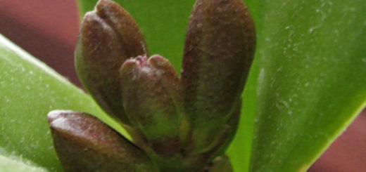 Цветонос орхидеи вблизи