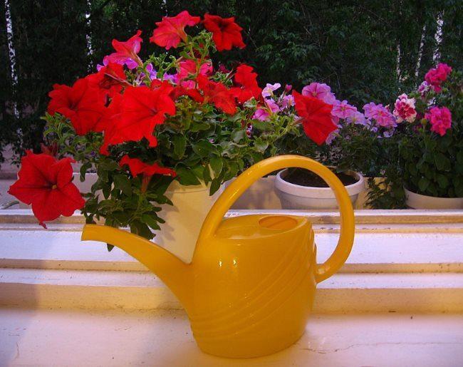 Желтая лейка из пластика на фоне цветущих кустиков петунии