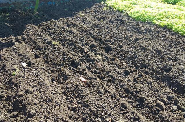 Бороздки на поверхности участка под весенний посев горчицы как сидерата