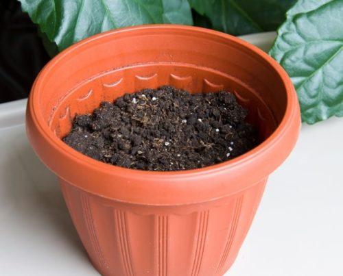 Пластиковый горшок с питательным грунтом для подсолнуха