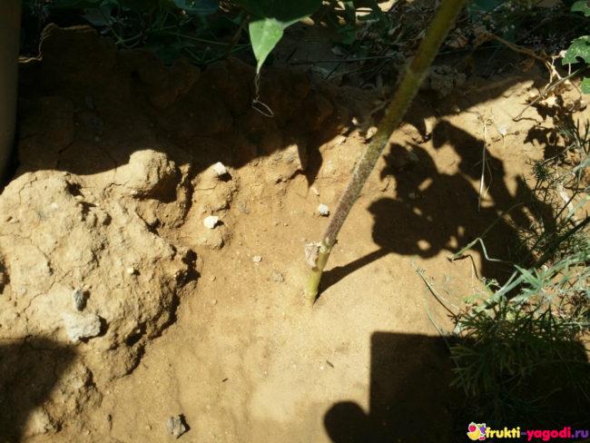 Политая почва в течении дня
