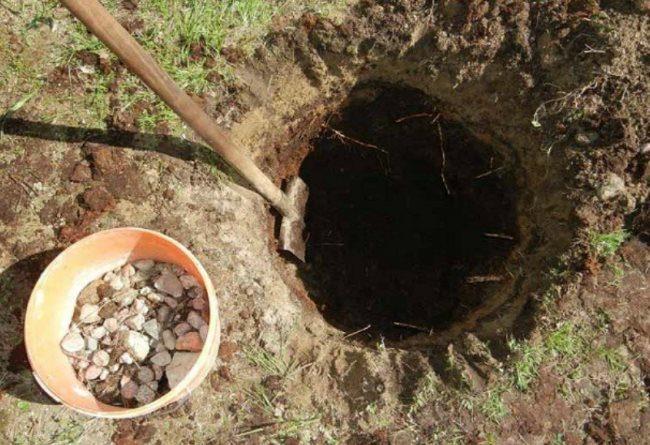Ведро с камнем для дренажного слоя в посадочной яме под вишню