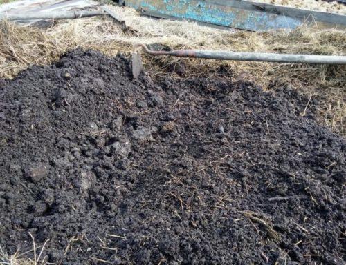 Канавка в мокрой земле для зимнего хранения саженцев вишни