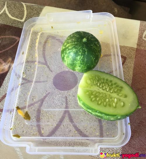 Круглый огурец плод в разрезе перед едой