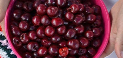Спелые плоды сорта вишни Ливенская в ведёрочке